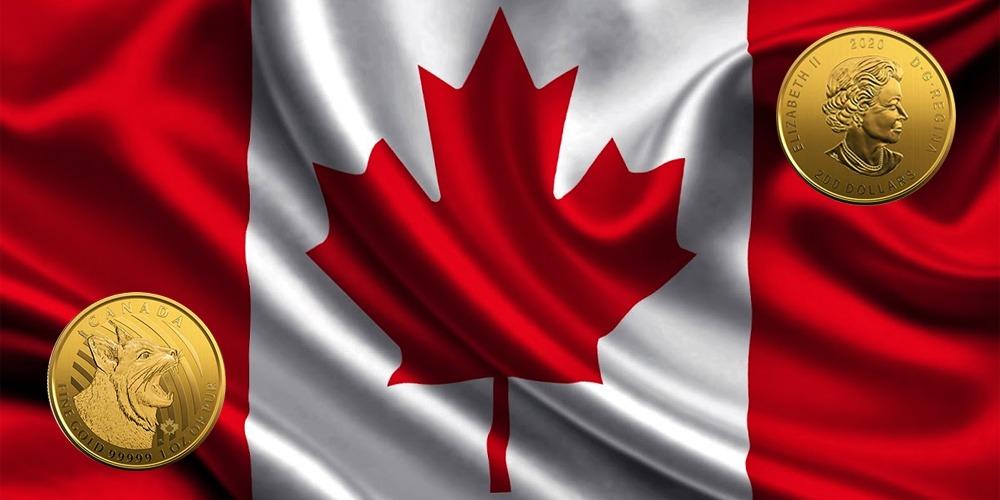 Рысь Канада 2020