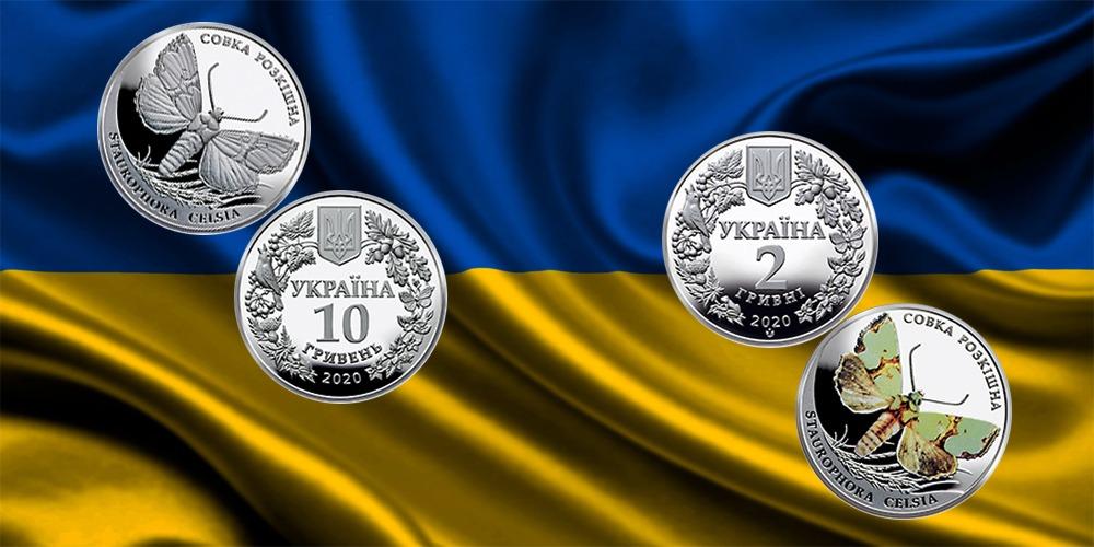 Совка великолепная Украина