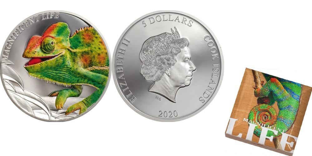 Хамелеон остров Кука 2020