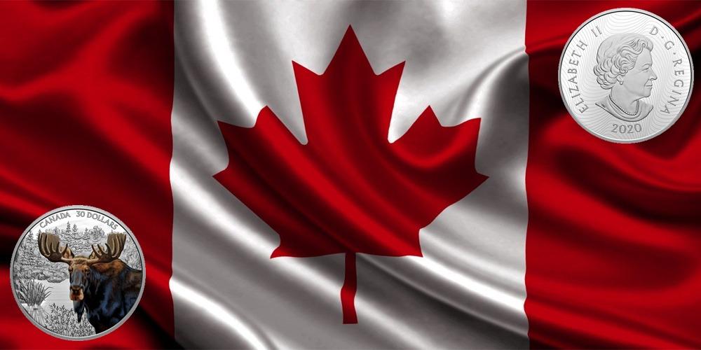 Лось Канада 2020