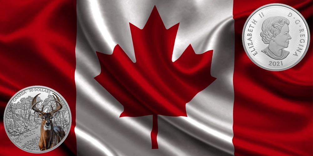 Белохвостой олень Канада 2021